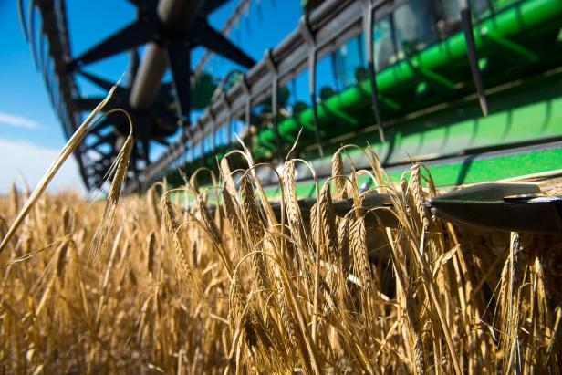 Barley harvesting on Brad Jones's property in Tammin WA. Close-up of header.